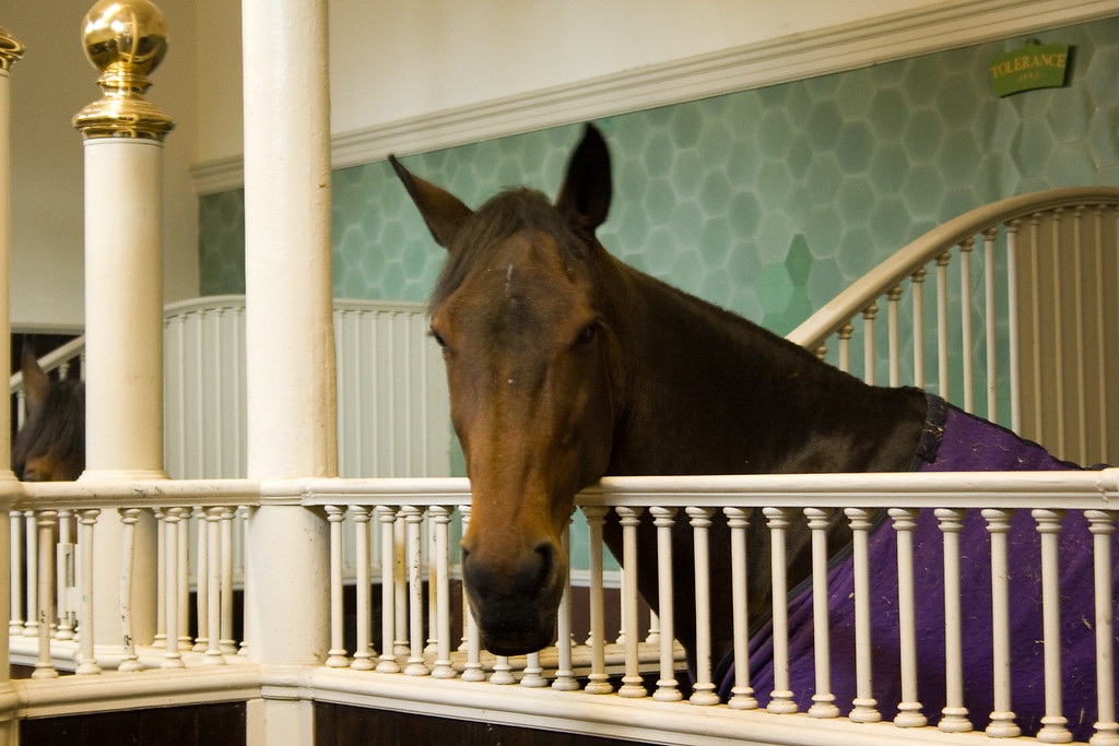 The Queen's Mews is the royal stable. These are the queen's horses.