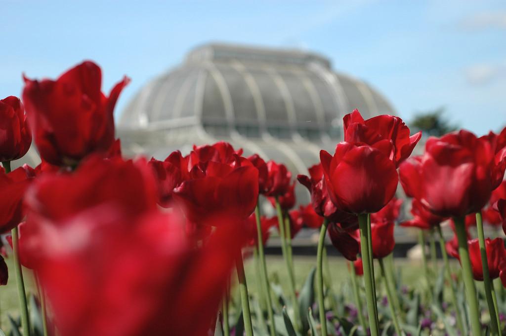 Kew Park, London
