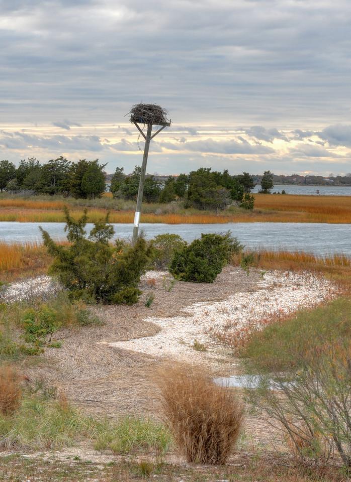 Bird perch, Orient Point