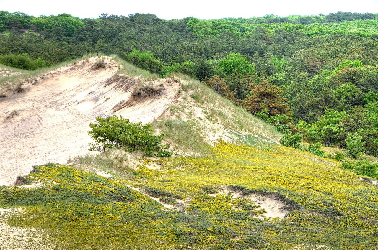 Walking Dunes, Montauk