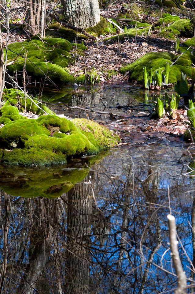 Seal Haulout reflection, Montauk