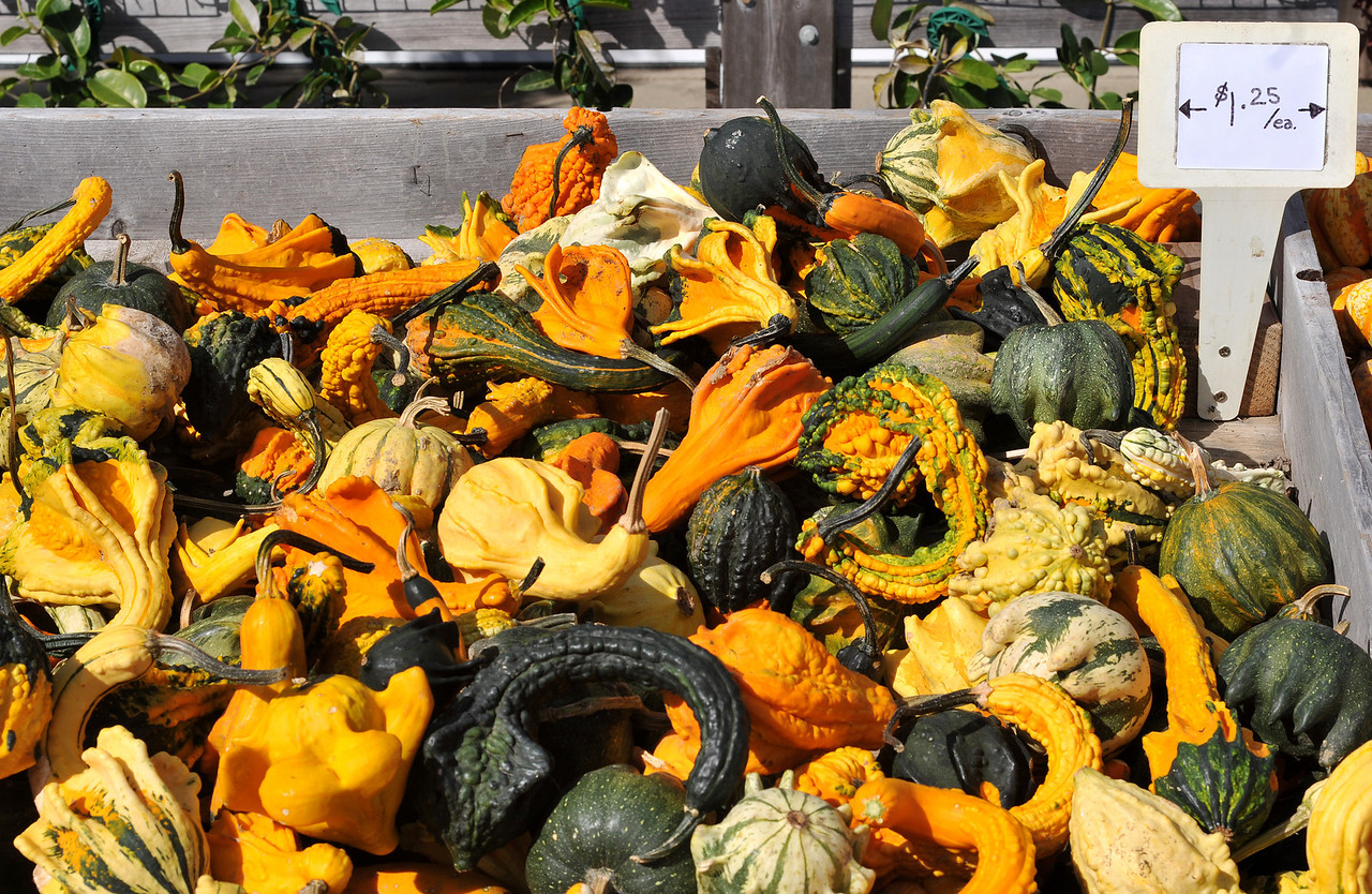 Gourds at pumpkin stand, East End, Long Island