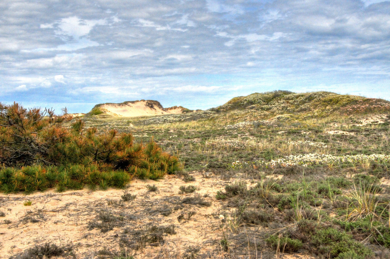 Hither Hills dunes, Montauk