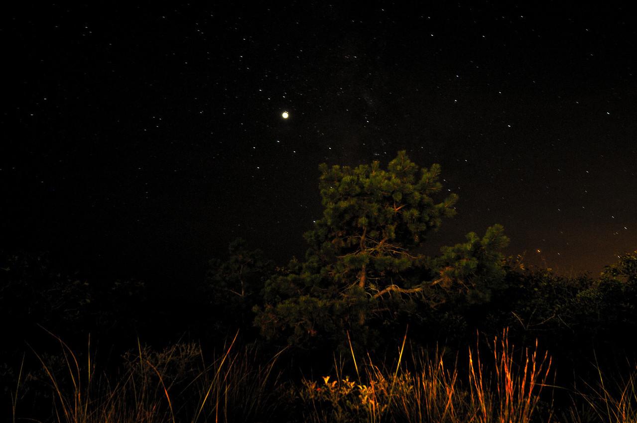 Jupiter in Sagittarius, over a dwarf pine. Hither Hills, Montauk.
