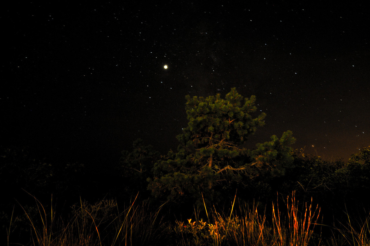 Jupiter in Sagittarius, over a dwarf pine. Hither Hills, Montauk.
