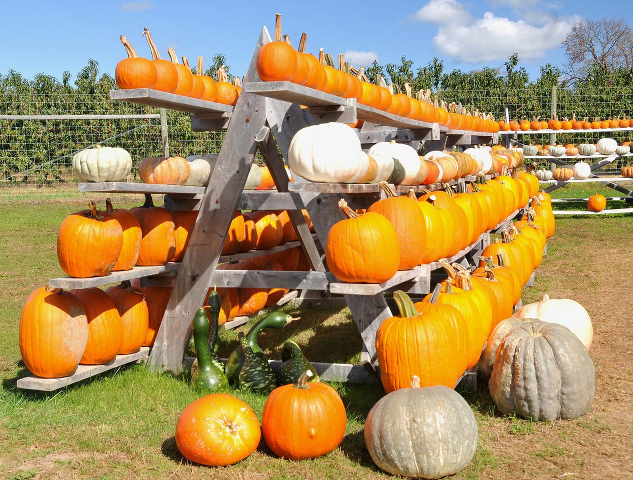 Roadside pumpkin stand, East End, Long Island