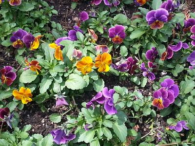 Longwood Gardens, April, 2016