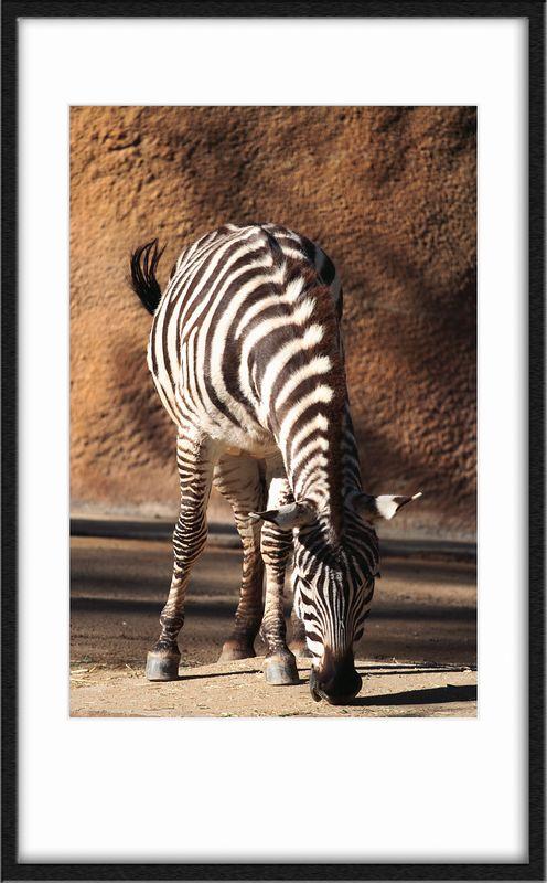Zebra of course.