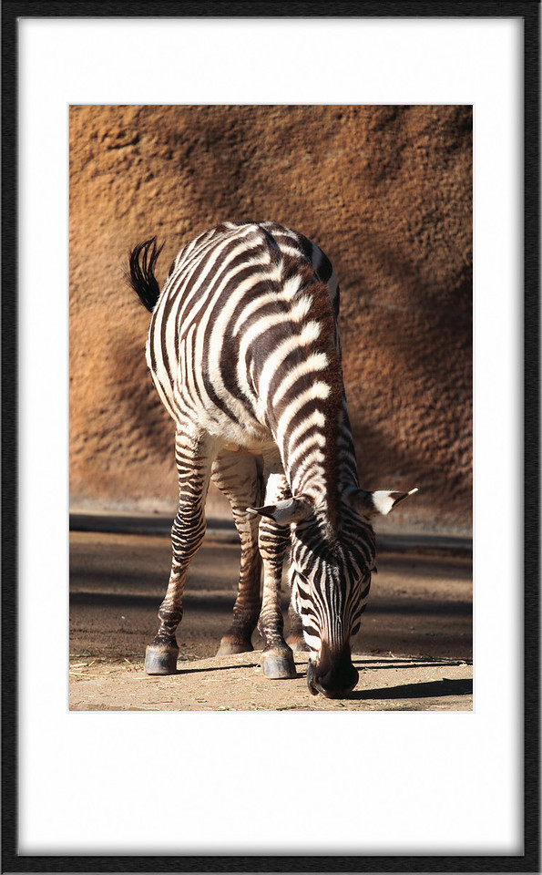 Zebra of course.