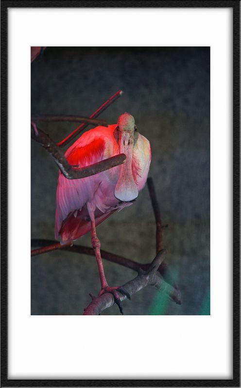 Funny beak!