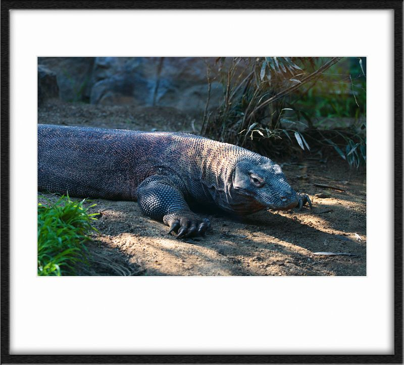 Komodo Dragon. Real creepy in person, with a looong forked tongue that would slowly slink out.