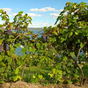 We were in wine country, so I had to take a picture of the grape vines above the lake.<br /> Holly tried more different wines this week than in the rest of her life.