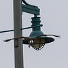 Osprey diving from light pole.