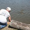Rick luring little gator