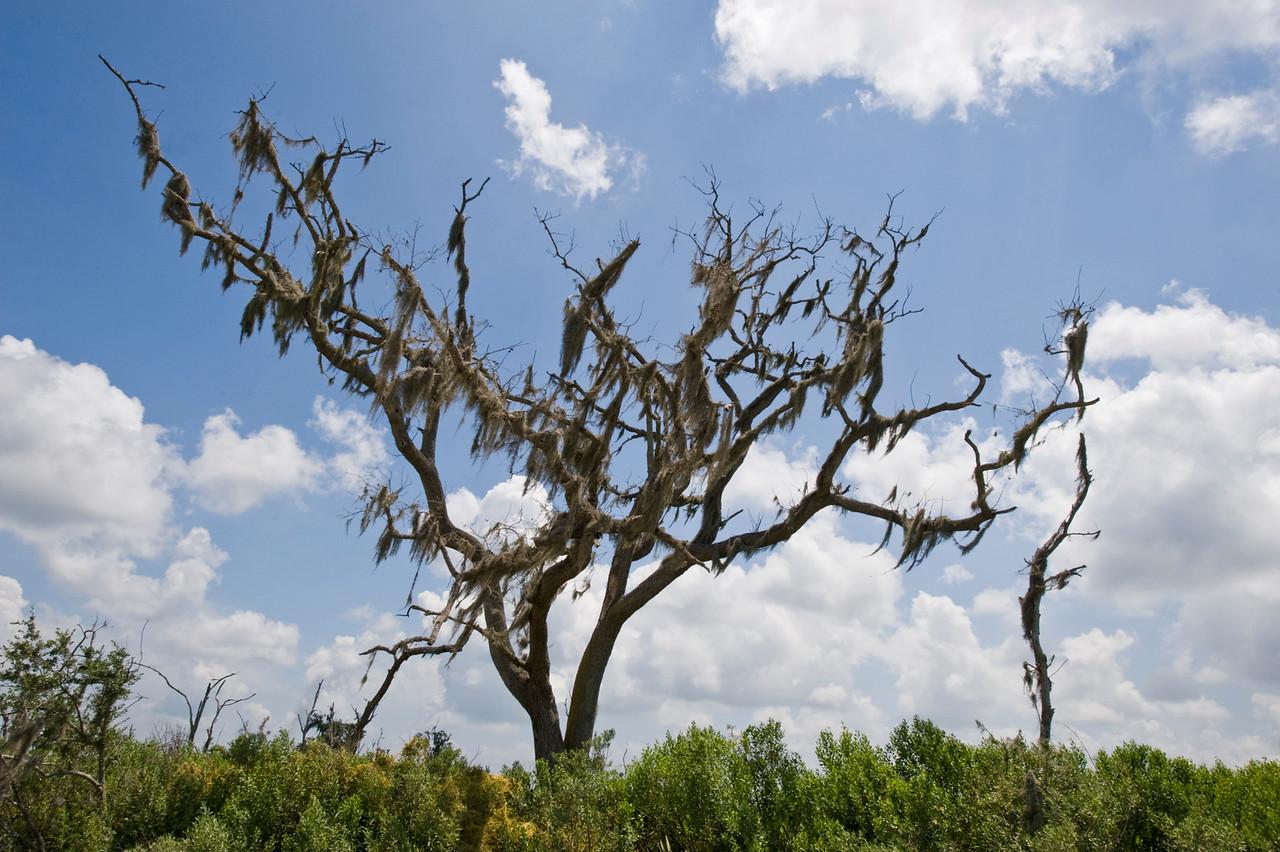 Mossy tree, near Lake Judge Perez.