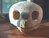 Loggerhead turtle skull on a window sill in the main room.