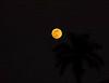 Tropical moonrise, Boynton Beach backyard, Florida, December 23, 2007