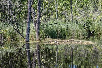 Lowes Lake-9095