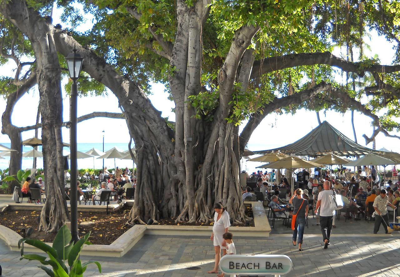 Banyon Tree at Ala Moana Hotel