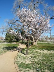 Lubbock Memorial Arboretum