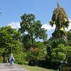 The Dominica Botanical Gardens.