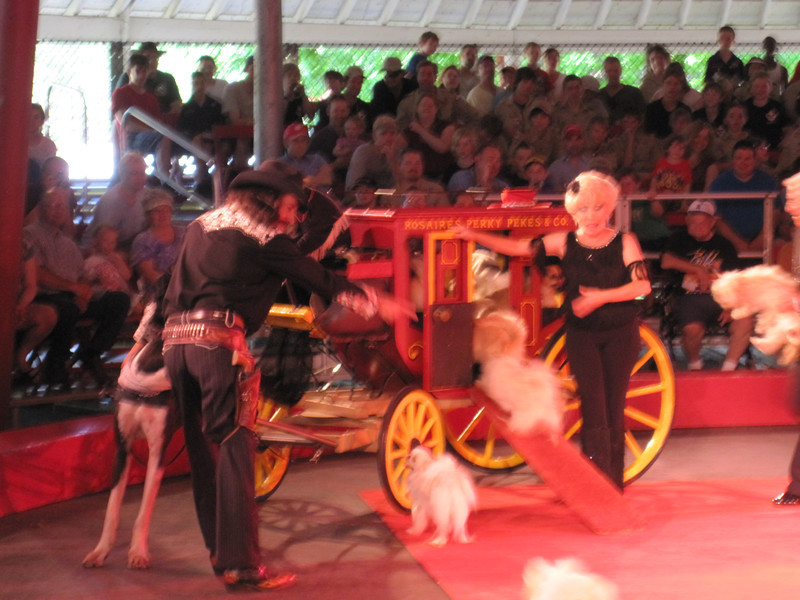 The dogs piled into the carriage, and it was driven off by a baboon and a Great Dane.  It was pretty funny....