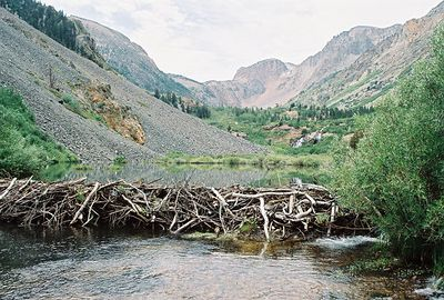8/16/04 Beaver Dams on Mill Creek, Lundy Canyon