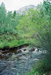 8/16/04 Mill Creek, Lundy Canyon