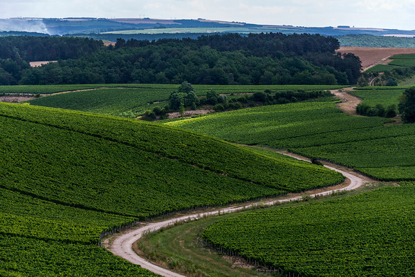 The winding limestone road up to the Jean-Marc Brocard Winery, through an enormous Chablis vineyard.