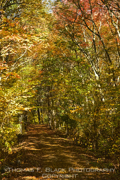 hiking trail in D.A.R. state forest, goshen (Hwy. 9).