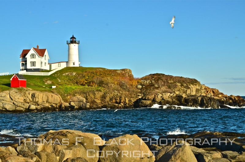 This and five frames following, views of Cape Neddick (a.k.a. Nubble) lighthouse and head light, York, built in 1874. All exposures were taken the same October afternoon at varying stages of daylight. Note airborne seagull here. As if on cue, he or she flew into viewfinder just in time. Thank you, seagull. You're in my will. [UFP102112]