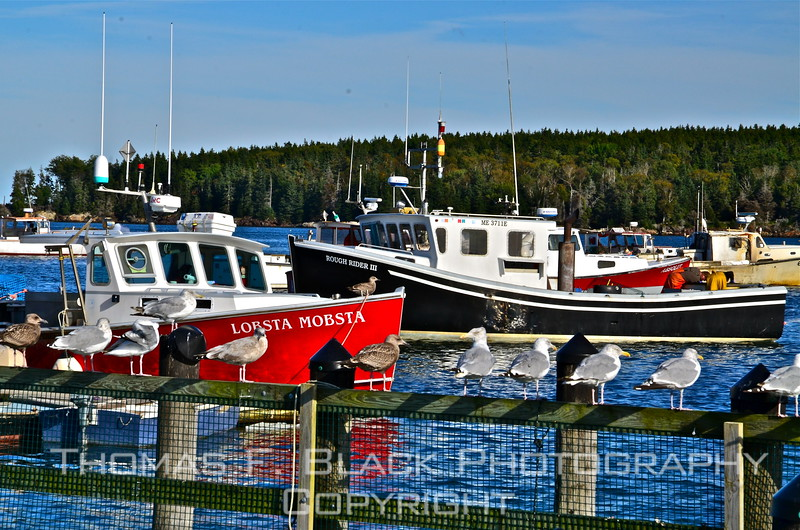 Seagulls dutifully watch over Lobsta Mobsta, one of numerous fishing vessels whose home port is Rockland. [UFP092012]