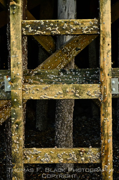 Barnacle-encrusted ladder under wharf at Owl's Head harbor. Our paws got wet taking this one. [UFP101612]
