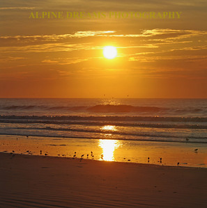 I called this   GOLDEN SUNRISE .   The Sandpipers and Gulls were quite busy at this time of day.