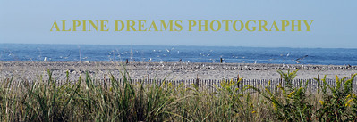 I called this BEACH, BIRDS & REHOBOTH  the horizon is clear and you can see Rehoboth towers and such. There were hundreds of gulls flying in formation above the beach.