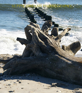 This is called WEATHERED DRIFTWOOD  and it almost appears to have hair on it from the efect that the salt water has on it.
