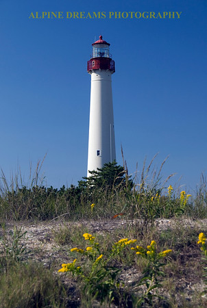 This shot called   LIGHTHOUSE YELLOW FLOWERS was taken mid day on the beach side of the dunes. If you look close you'll see an orange butterfly above the yellow flowers. The bright blue sky helps this colorful lighthouse stand out.