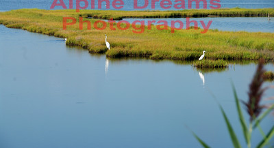 Reeds Water Grasses and Birds