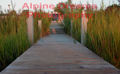 Dock and Reeds