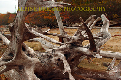 ANTLERS OF WOOD
