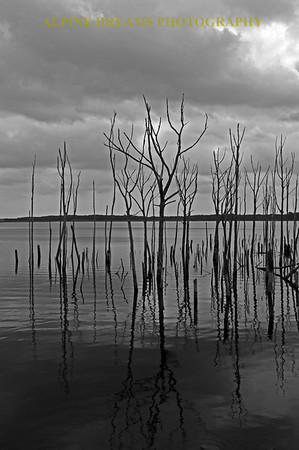 I call this one DARK TREES and SHADOWS!   It's my Twilight Zone type image.  One of my favorites. I was hiking and shooting right before a storm arrived when I turned around and saw this. The sky was dark and the water was still and the trees were dead.   Perfect for a Black and White but even the one I shot in Color is pretty Spooky!