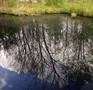 POND-REFLECTIONS-3
