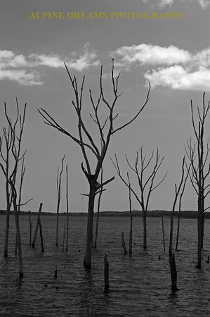Dead trees shot in B & W    I like this look but I think its more impressive on a cloudier day.