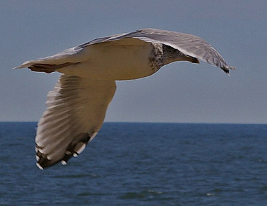 GULL-N-FLIGHT