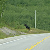 Drivers must always be alert on this road - Trans Canada Highway near White River.<br /> Our one sighting of a moose!