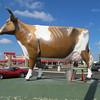 Bessie the Cow, Janesville, WI
