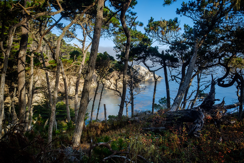 POINT LOBOS STATE PARK - CARMEL