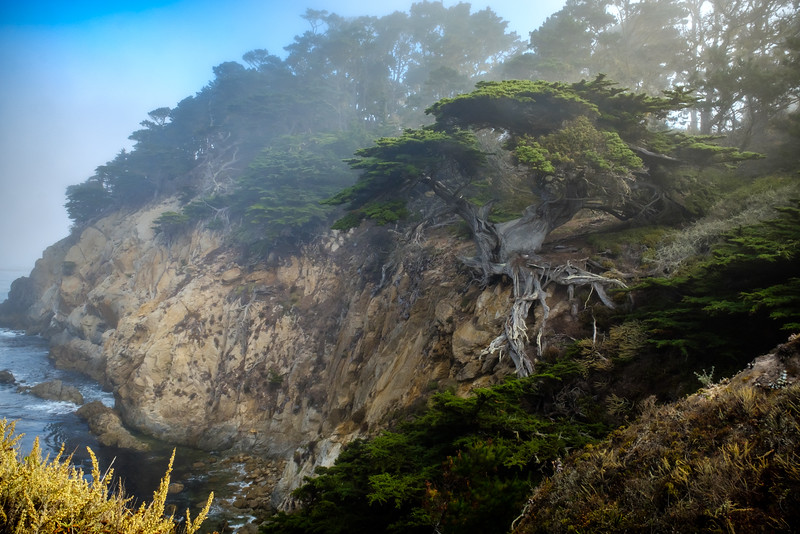 CYPRESS TREE AT POINT LOBOS