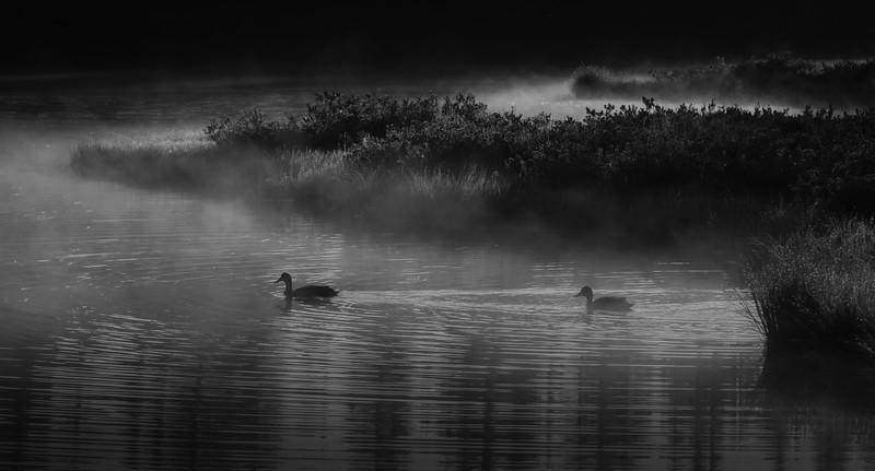 FOGGY MORNING AT REFLECTION LAKE