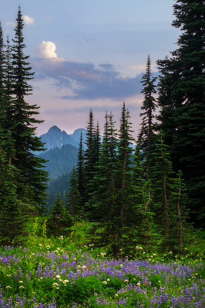 WILDFLOWERS AND DOUGLAS FIRS